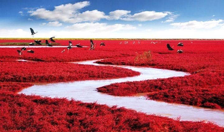 plages rouges
