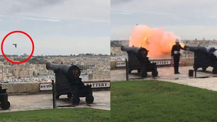 pigeon grillé coups de canons