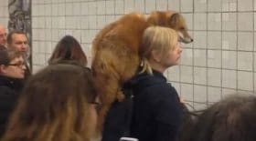 renard metro russie