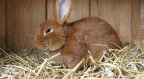 tueur en série lapins