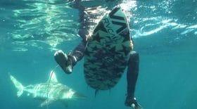 Un surfeur attaqué et blessé par un requin