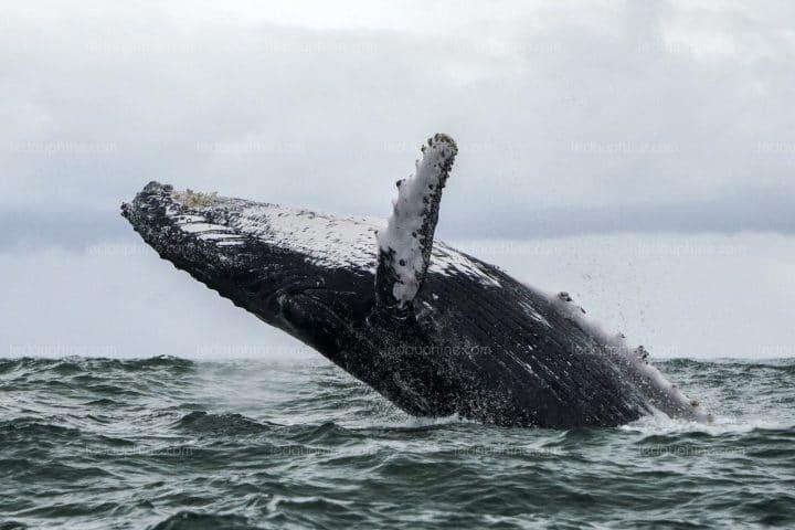 baleine dans l'océan