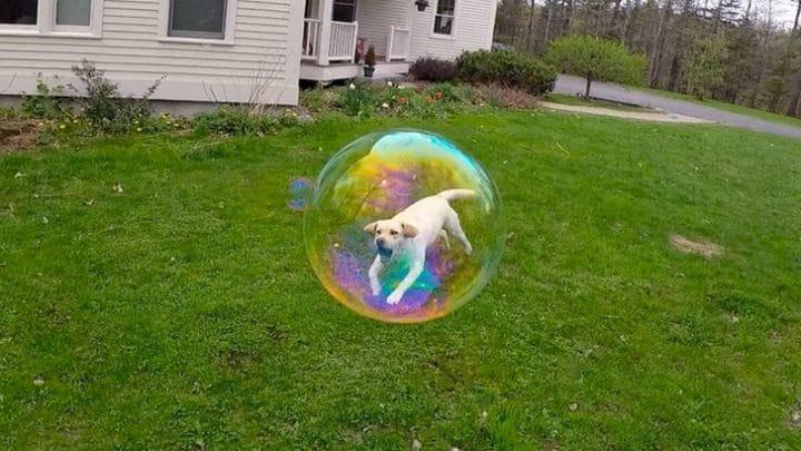 chien dans une bulle