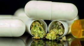 Des experts Français en faveur du Cannabis thérapeutique
