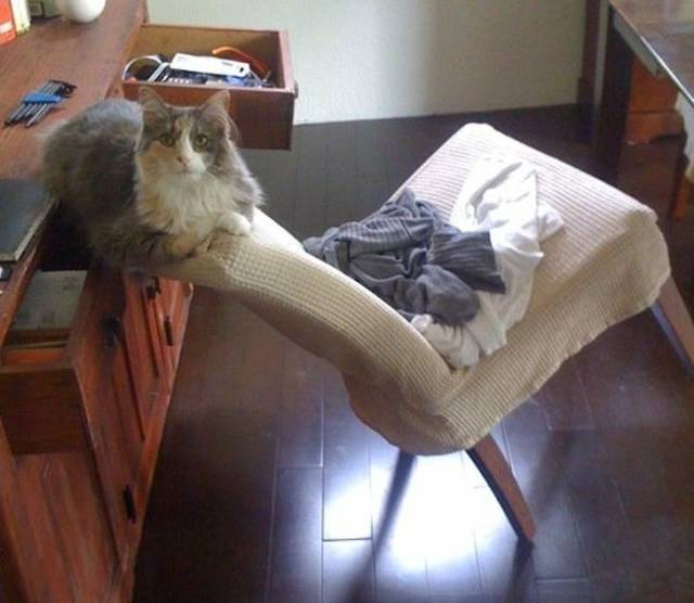 Chat chaise
