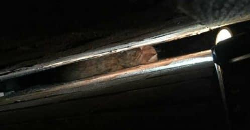 Un chat coincé dans un lieu improbable