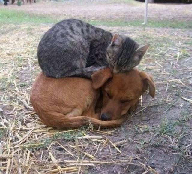 Chat dort chien
