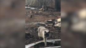Un chat retrouve ses maîtres après les incendies