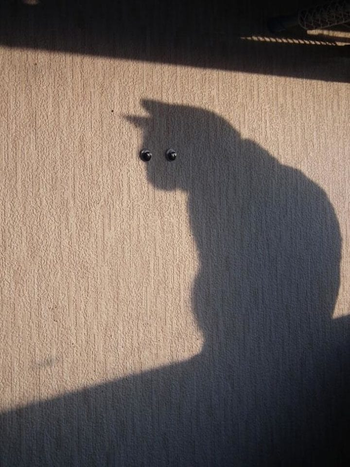 ombre chat mur