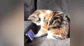 Petit chat fan de youtube