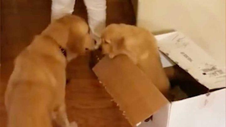 chien recoit un cadeau noël chiot