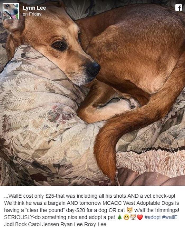 chien-wall-e-abandonné-refuge
