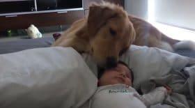 Un superbe calin entre un chien et un bébé