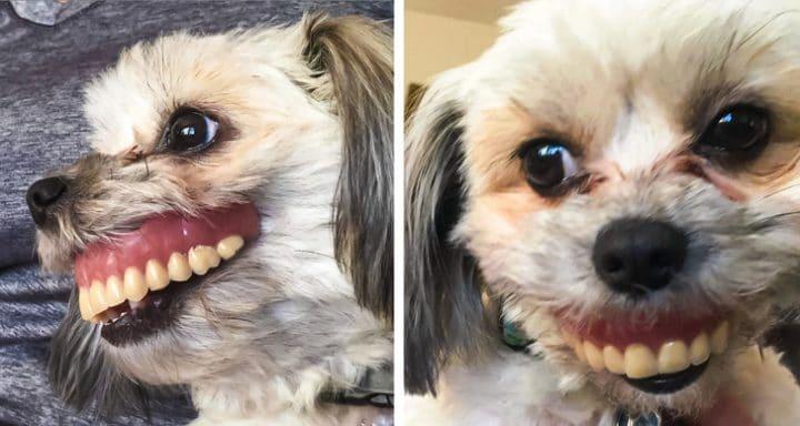 Chien avec dentier