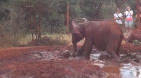 Un éléphant joue au foot