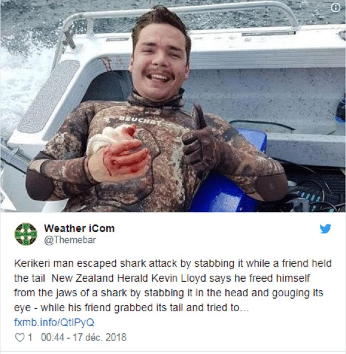 plongeur-survit-attaque-requin