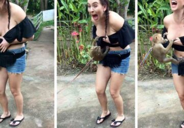 singe déshabille une touriste montre poitrine