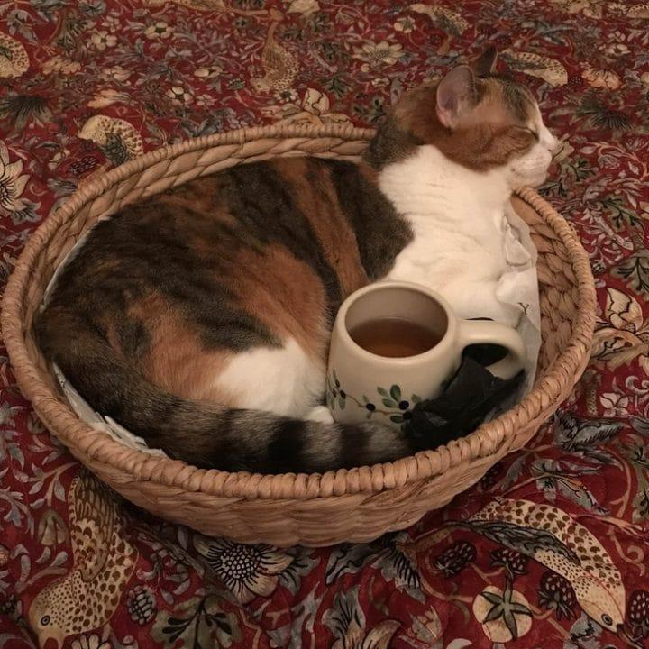 Chat avec du thé