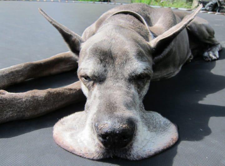 animaux fatigués