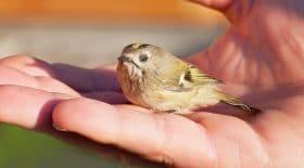 chasse-glu-oiseau_LPO