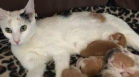 chatte-errante-bébé-molly
