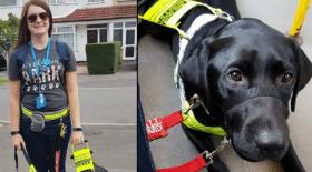 chien-guide-handicap