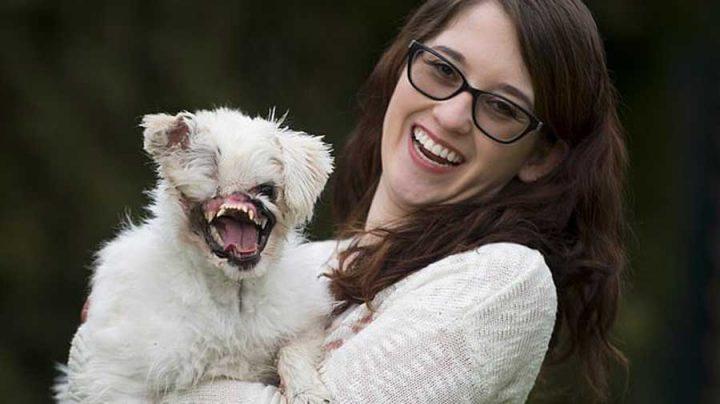 chien difforme déformé jet d'acide