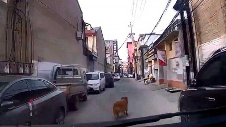 chien dirige ambulance vers son maitre à terre