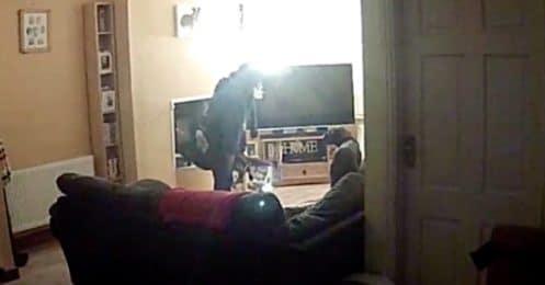 Une promeneuse professionnelle bat une chienne boxer