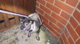chien-sauvetage-abandonné-RSCPAjpg