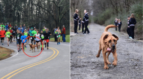 chien-semi-marathon-gagne