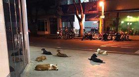 chiens devant hôpital