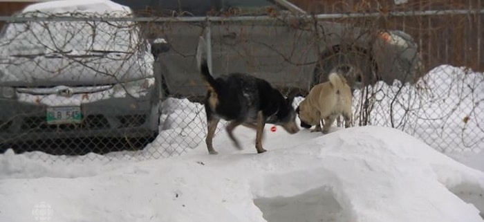 chiens-parc-attractions-neige