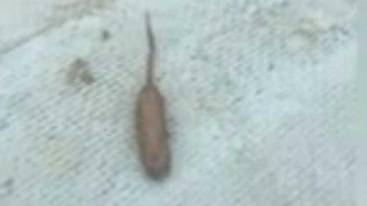 créature étrange saucisse vivante