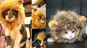 criniere lion chat