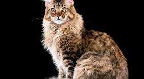 Une pension pour animaux se trompe en rendant un chat