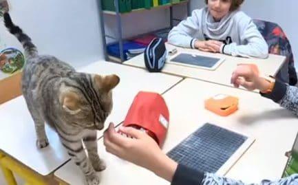 Des chats en classe pour le bonheur des élèves