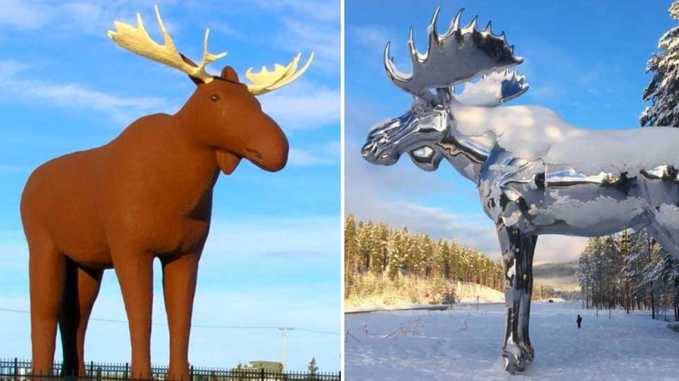 La guerre des élans ! Le Canada et la Norvège se disputent le titre
