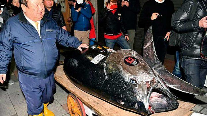 thon rouge vendu prix record lourd