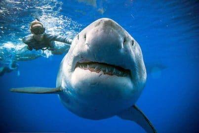 requin-tue-pêcheur