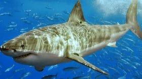 La chanteuse Russe Hanna attaquée par un requin