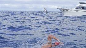 adam-walker-dauphin-requin-sauver