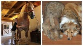 taille surprenante des animaux
