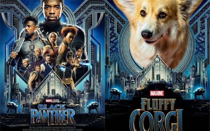 films chien