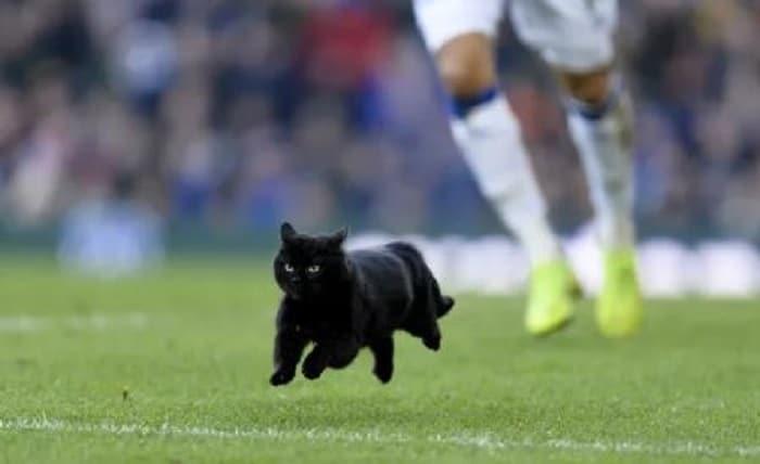 chat-noir-foot-match-terrain