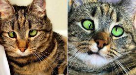 chat qui louche trop mignon strabisme