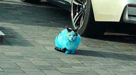 chats et chiens pigments bleus