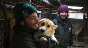 chien-sauvetage-maltraitance