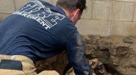 chien-tortue-trou-sauvetage-pompiers-découverte