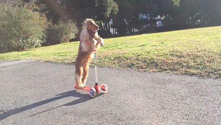 chien fait de la trottinette skateboard